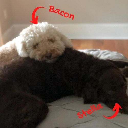 Bacon and Stella